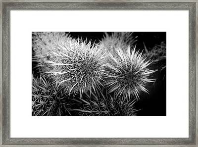 Framed Print featuring the photograph Cactus Spines by Phyllis Denton