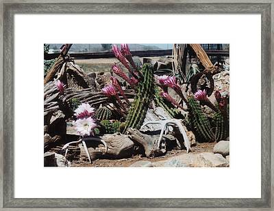 Cactus Still Life Framed Print by E M Murray