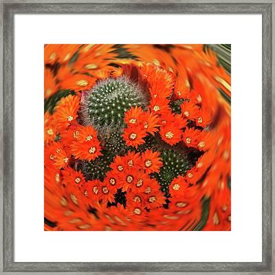 Cactus Swirl Framed Print