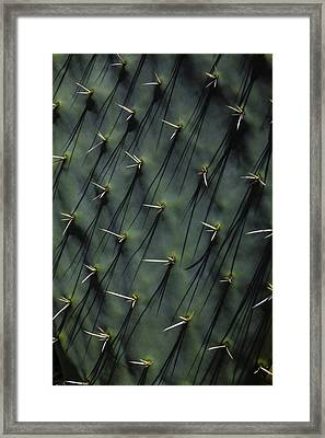 Cactus Thorn Shadows Framed Print by Garry Gay