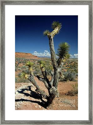 Cactus Tree In The Desert At Bryce Canyon National Park Framed Print by Sami Sarkis