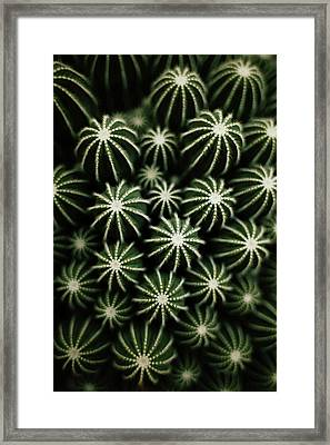 Cactus Framed Print by T*tomorrow
