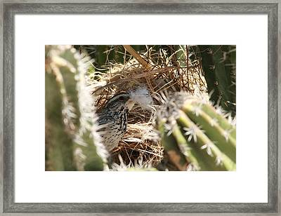 Cactus Wren Feather Framed Print