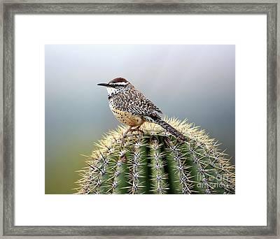 Cactus Wren On Saguaro Framed Print