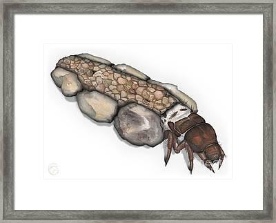Caddisfly Larva Nymph Goeridae_silo_pallipes -  Framed Print