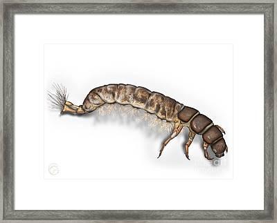 Caddisfly Larva Nymph Psychomiidae Hydropsyche Pellucidula -  Framed Print