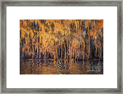 Caddo Abstract Trees Framed Print