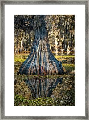 Caddo Cypress Bottom Framed Print