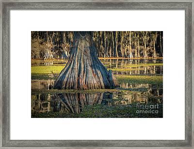 Caddo Cypress Trunk Framed Print