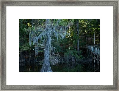 Caddo Lake #1 Framed Print