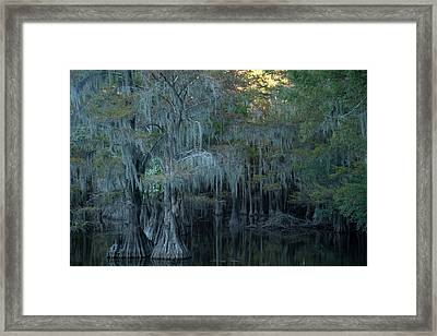 Caddo Lake #2 Framed Print