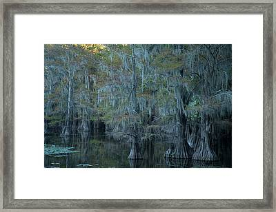 Caddo Lake #3 Framed Print