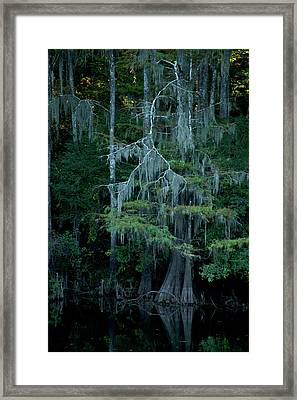 Caddo Lake #4 Framed Print