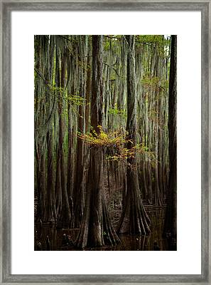 Caddo Lake #5 Framed Print