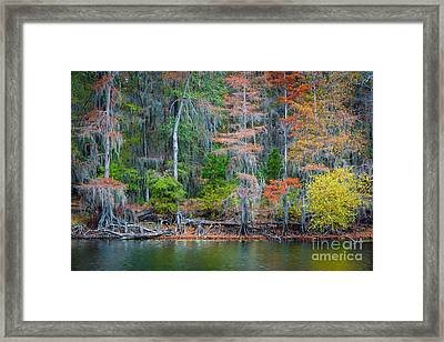 Caddo Lake Fall Foliage Framed Print by Inge Johnsson