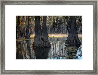 Caddo Lake Grove Framed Print
