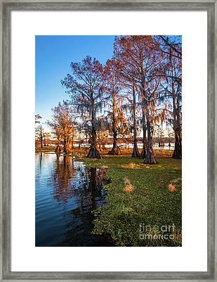 Caddo Lake Shoreline Framed Print