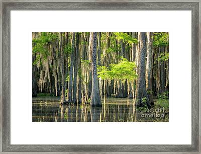 Caddo Swamp 1 Framed Print