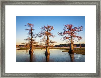 Caddo Three Trees Framed Print