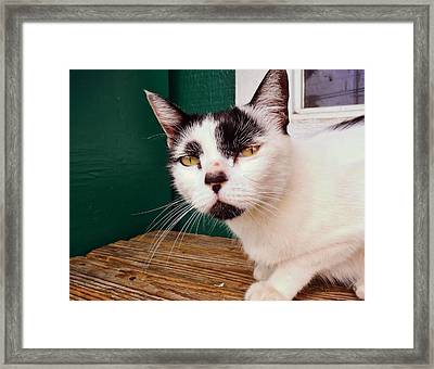 Cafe Cat  Framed Print by JAMART Photography