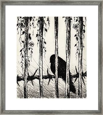 Caged Bird Framed Print by Rachel Christine Nowicki