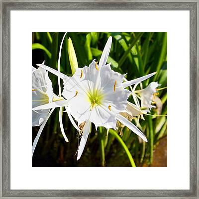 Cahaba Lily Framed Print by Fred Baird