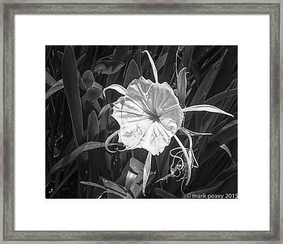Cahaba Lily Framed Print