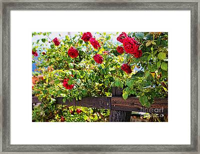 Cahecho 155a7790 Framed Print