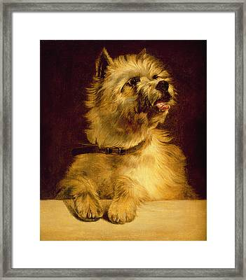 Cairn Terrier   Framed Print by George Earl