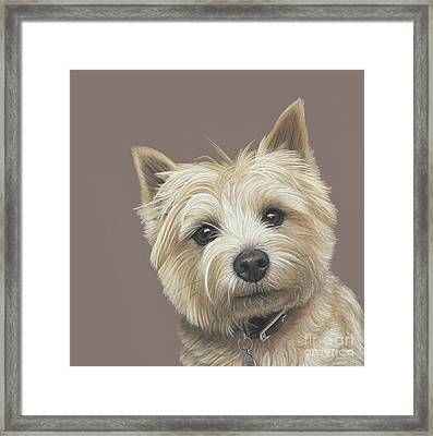 Framed Print featuring the painting Cairn Terrier - Dave by Donna Mulley