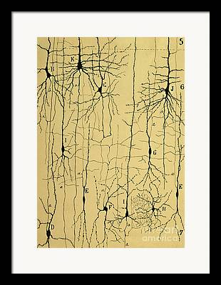 Neurons Framed Prints