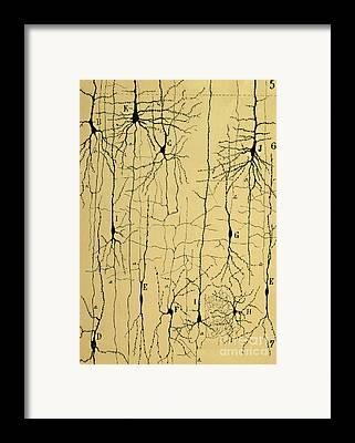 Biology Framed Prints