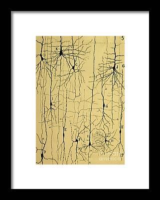 Neuron Framed Prints