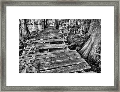 Cajun Country Bw Framed Print by JC Findley