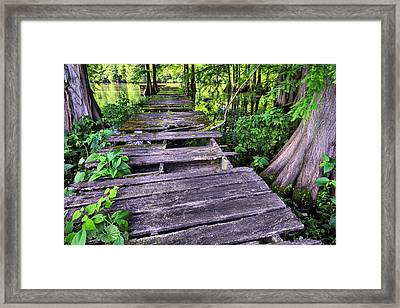 Cajun Country Framed Print by JC Findley