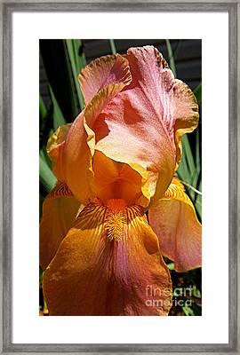 Cajun Sunset Framed Print