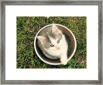 Cake Framed Print by Mary Tron