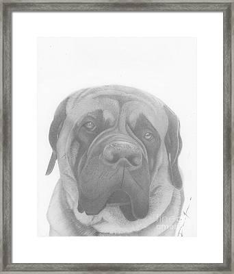 Cal Framed Print