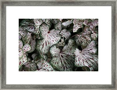 Framed Print featuring the photograph Caladium Leaves by Debi Dalio
