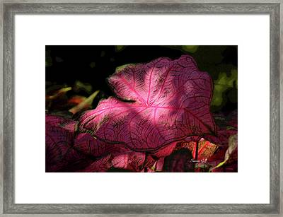Caladium Mystery Framed Print by Suzanne Gaff