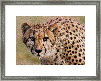 Calculated Look Framed Print