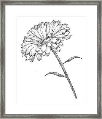 Calendula Framed Print by Christy Beckwith