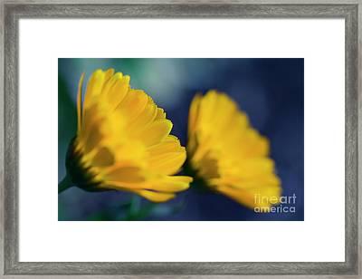 Framed Print featuring the photograph Calendula Flowers by Sharon Mau