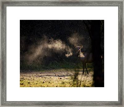 Framed Print featuring the photograph Calf Elk In December by Michael Dougherty