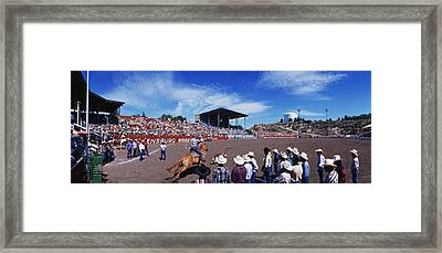 Calf Roping Event At Ellensburg Rodeo Framed Print