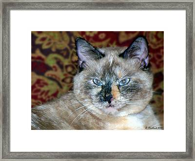 Framed Print featuring the photograph Cali-mese by Betty Northcutt