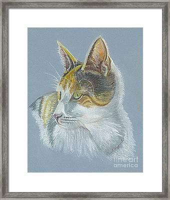 Calico Callie Framed Print by Carol Wisniewski