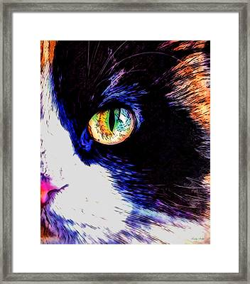 Framed Print featuring the photograph Calico Cat by Kathy Kelly