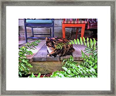 Calico Cat Key West Porch Framed Print by Joan Minchak