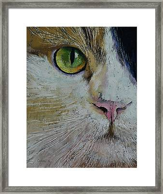 Calico Cat Framed Print by Michael Creese
